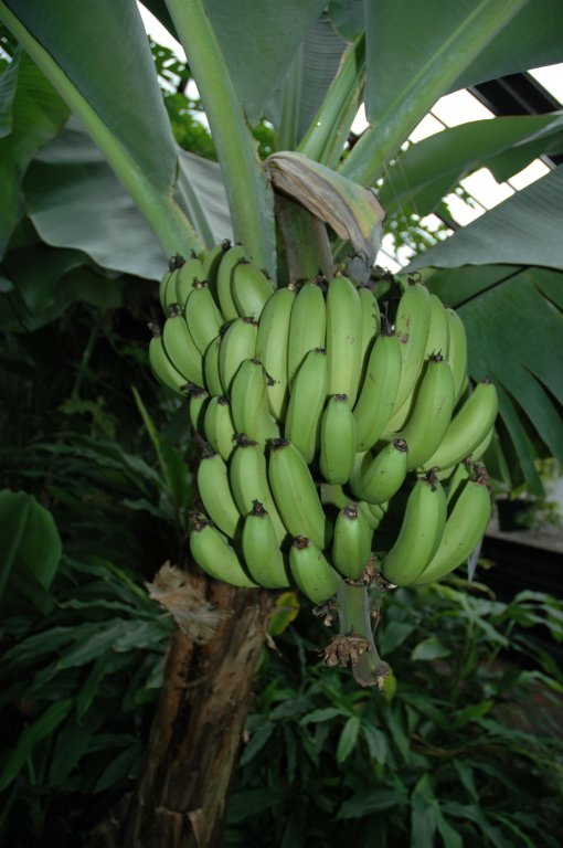 canary-banana-19-12-05